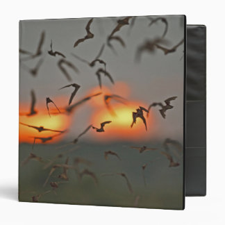 Mexican Free-tailed Bats Binders