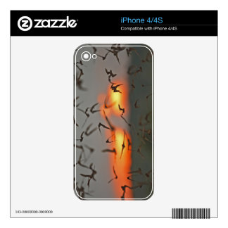 Mexican Free-tailed Bats Skins For iPhone 4
