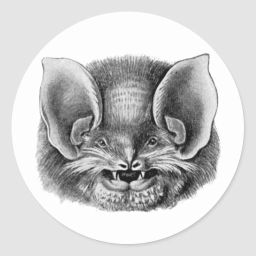 Mexican Funnel-eared Bat Classic Round Sticker