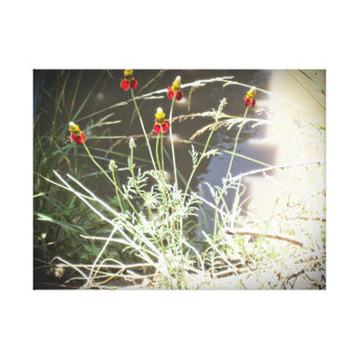 Mexican Hat Coneflower Flower in the Mountains Gallery Wrapped Canvas