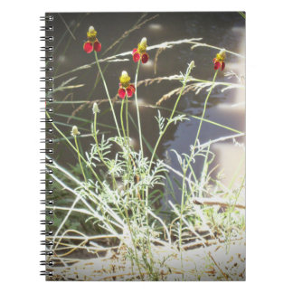 Mexican Hat Coneflower Flower in the Mountains Note Book