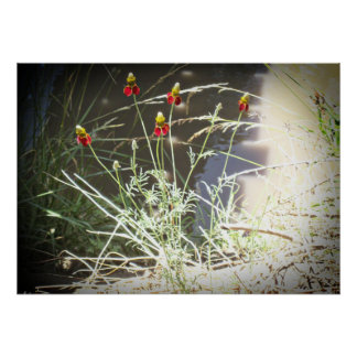 Mexican Hat Coneflower Flower in the Mountains Poster