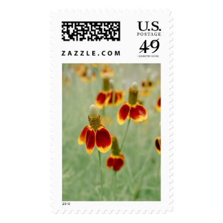 Mexican Hat Texas Wildflowers Postage