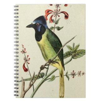 Mexican Jay Bird Notebook