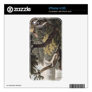 Mexican Lizard Catcher, engraved by Matthew Dubour Skin For iPhone 4