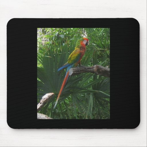 Mexican Macaw Mouse Pad