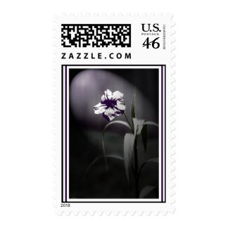 Mexican Petunia Art Postage Stamp