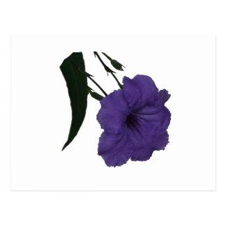 Mexican Petunia cutout flower Postcard