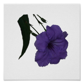 Mexican Petunia cutout flower Poster