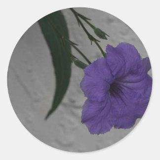 Mexican Petunia  flower Round Sticker