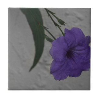 Mexican Petunia  flower Tile