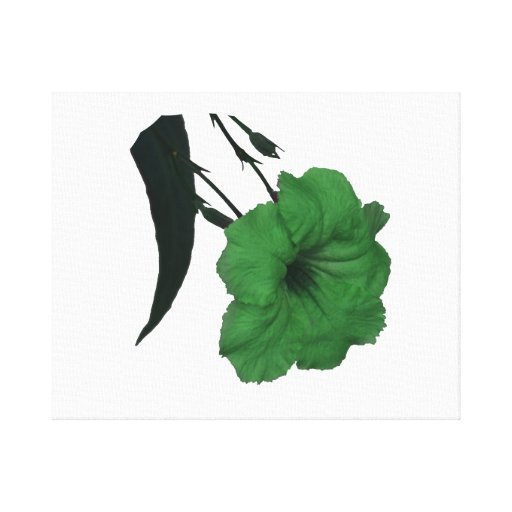 Mexican Petunia green colorized flower Canvas Prints