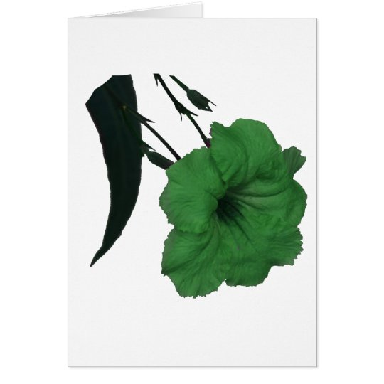 Mexican Petunia green colorized flower Card