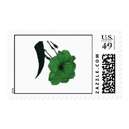 Mexican Petunia green colorized flower Postage Stamp