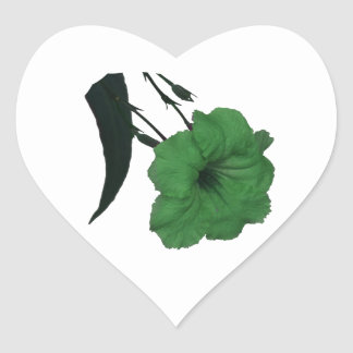 Mexican Petunia green colorized flower Heart Stickers