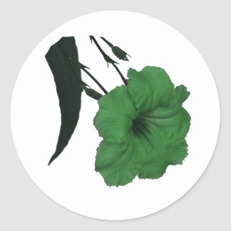 Mexican Petunia green colorized flower Round Stickers