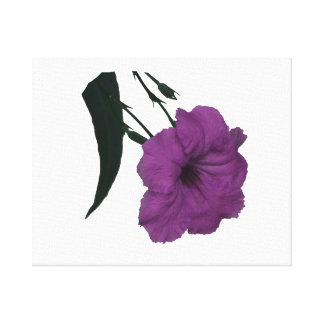 Mexican Petunia pink colorized flower Canvas Print