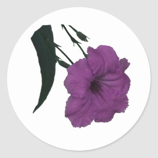 Mexican Petunia pink colorized flower Sticker