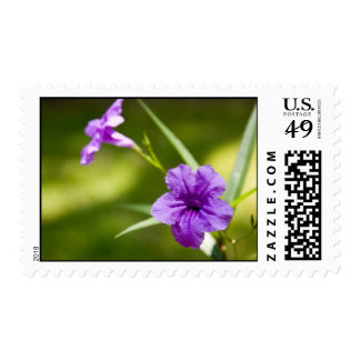 Mexican Petunia Postage