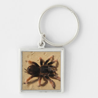 Mexican Pink Tarantula Silver-Colored Square Keychain