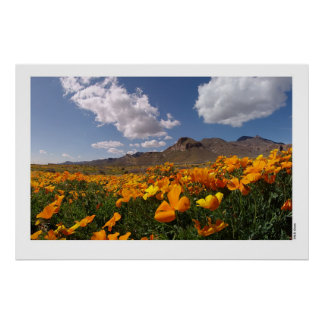 Mexican Poppies - Franklin Mountian State Park 2 Poster