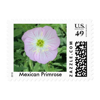 Mexican Primrose Flower Photograph Postage Stamps