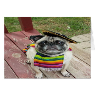 Mexican Pug Card