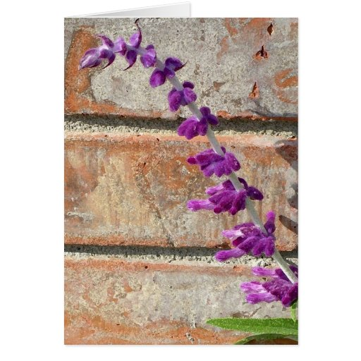 Mexican Sage Fluorishes Against Warm Brick Greeting Card