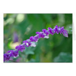 Mexican Sage Greeting Card