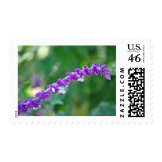 Mexican Sage Postage Stamps