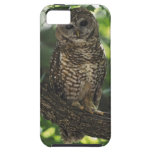 Mexican Spotted Owl On Perch In Gambel Oak iPhone 5 Cover