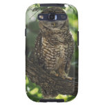 Mexican Spotted Owl On Perch In Gambel Oak Samsung Galaxy S3 Cases