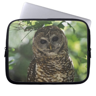 Mexican Spotted Owl On Perch In Gambel Oak Laptop Sleeve