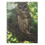 Mexican Spotted Owl On Perch In Gambel Oak Spiral Note Books