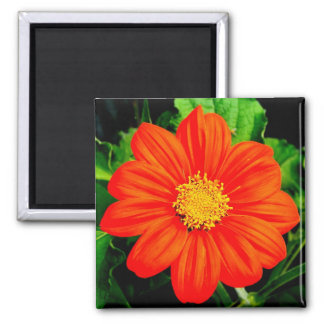 Mexican Sunflower Magnet