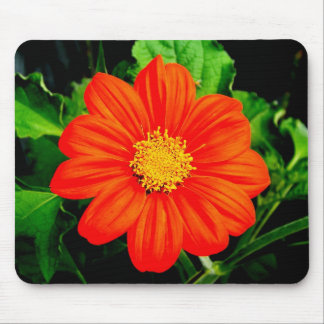 Mexican Sunflower Mouse Pad