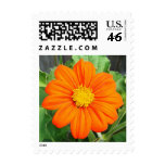Mexican Sunflower Postage