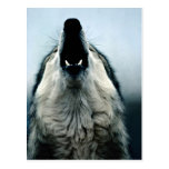 Mexican wolf, endangered species, Sonoran Desert, Postcard