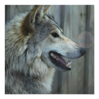 Mexican Wolf Invitations