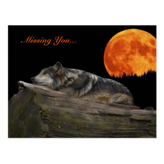 Mexican Wolf & Moon - Missing You... Postcard