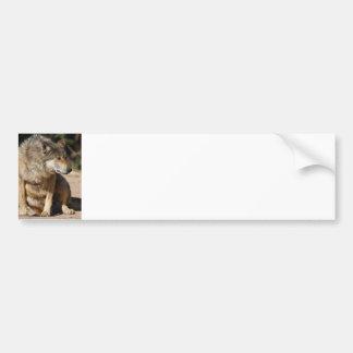 Mexican Wolf Portrait Bumper Sticker