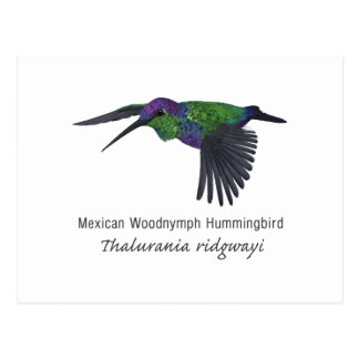 Mexican Woodnymph Hummingbird with Name Postcard