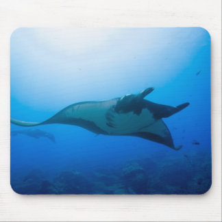 Mexico, Baja California, Biosphere Reserve, Mouse Pad