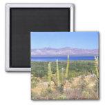 México, Baja California Sur, cactus de Cardon en Imán Cuadrado