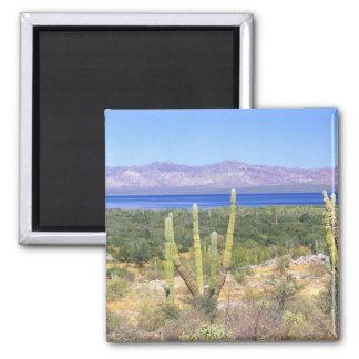 Mexico, Baja California Sur, Cardon Cactus at 2 Inch Square Magnet