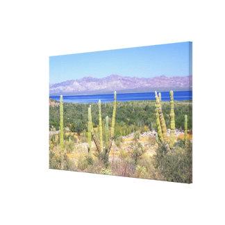 Mexico, Baja California Sur, Cardon Cactus at Canvas Print