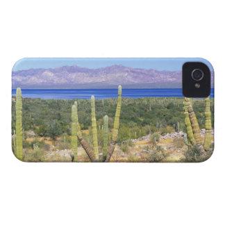 Mexico, Baja California Sur, Cardon Cactus at iPhone 4 Case-Mate Case