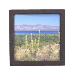 Mexico, Baja California Sur, Cardon Cactus at Keepsake Box