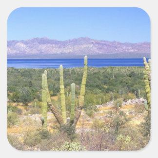 Mexico, Baja California Sur, Cardon Cactus at Square Sticker