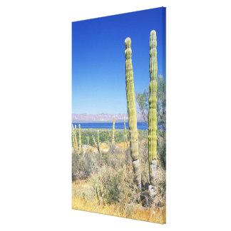 Mexico, Baja California Sur, Mulege, Bahia Canvas Print